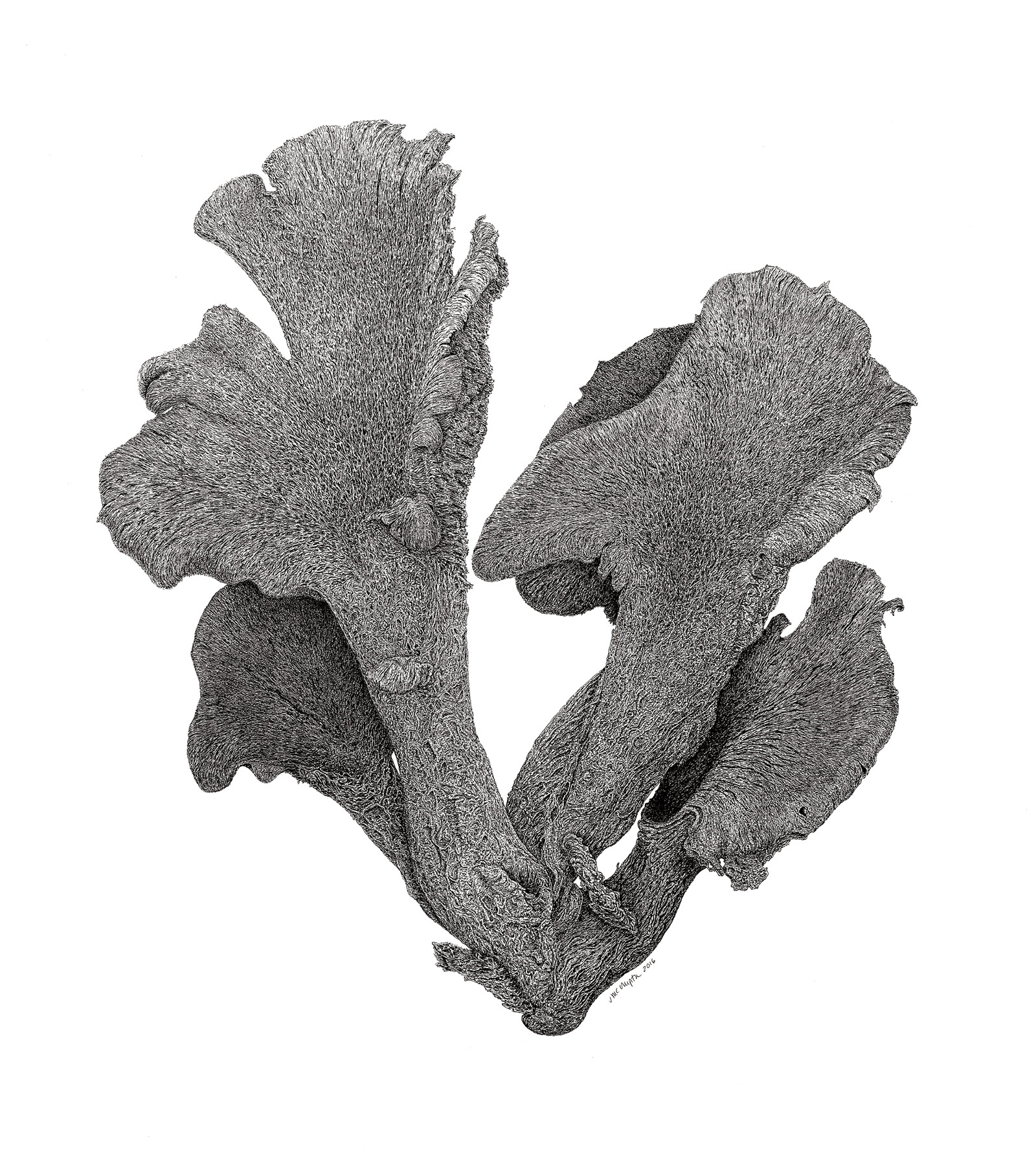 Whitneyvill Fungus Pen & Ink - Jeanette