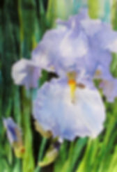 Single Iris Blossom-BivenneHarveyStaiger