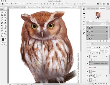 Screech-owl-promotion-kayama (1).jpg