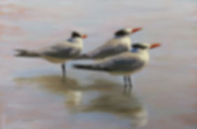 J. Prentice. Tern, Tern, Tern,  oil on c