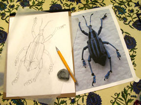 CTNSI Insects Writ Large 2014 Corrine Folsom-Okeefe Cicada eupholus for web