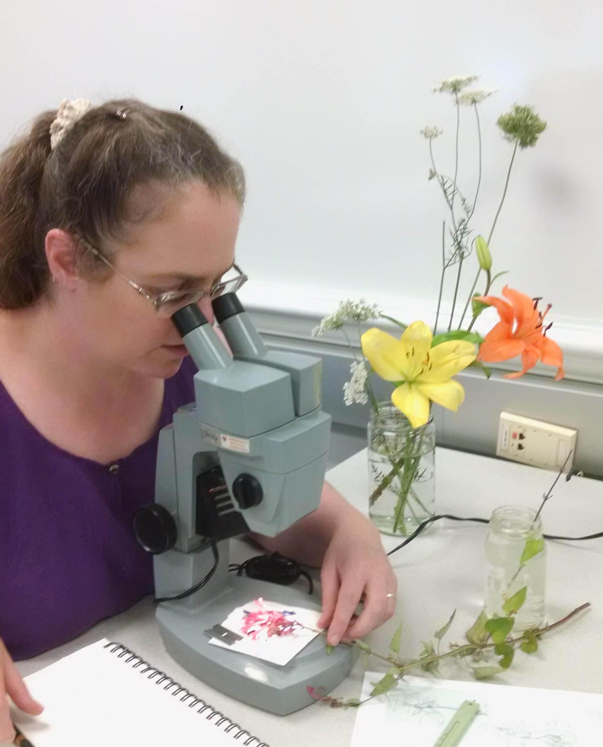 Flowers Through the Microscope