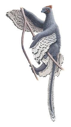 Anchiornis huxleyi