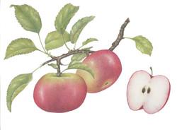 Apple Branch SOLD