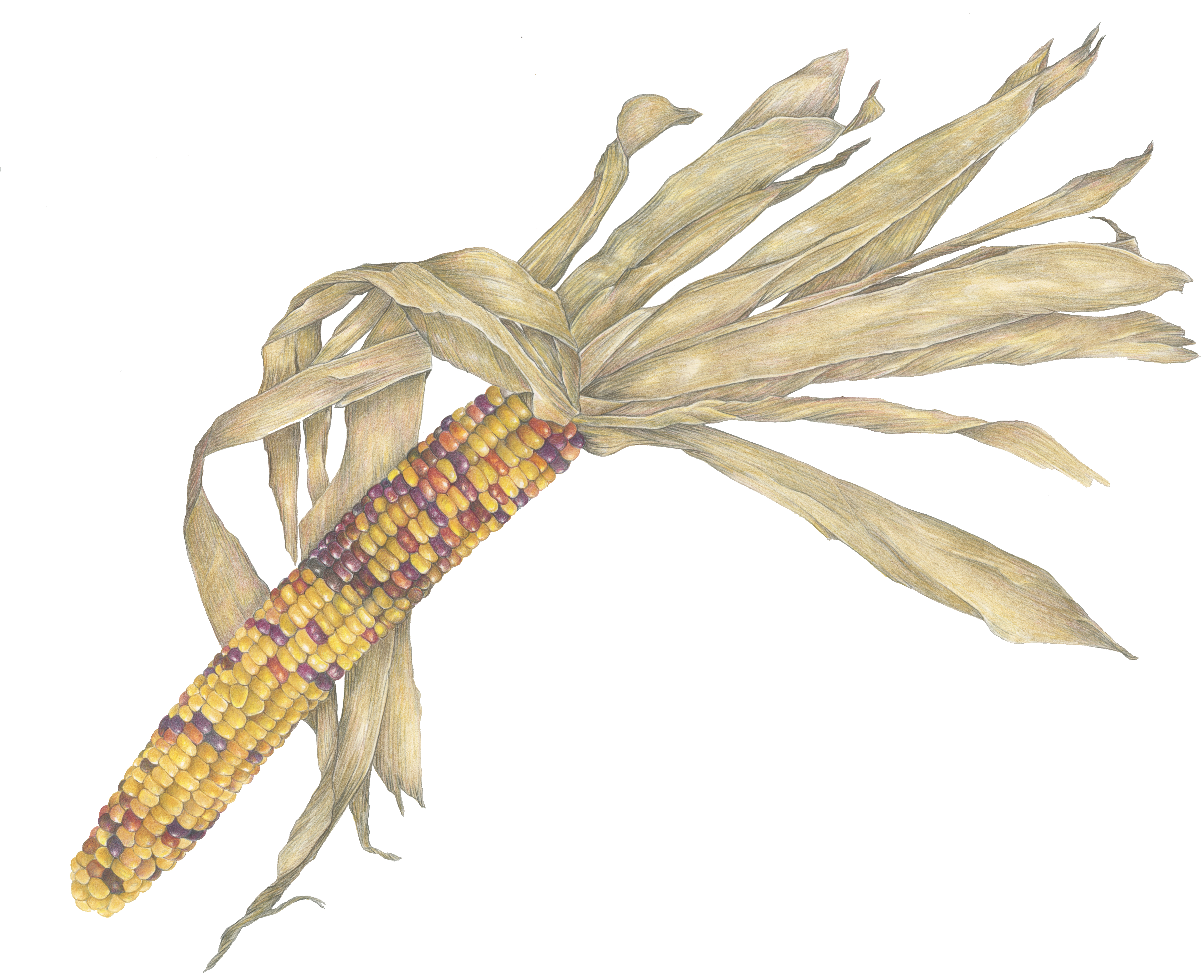 Yellow Indian Corn-Colored Pencil by Bet