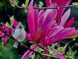 Tufted Titmouse the Magnolia - BivenneHa