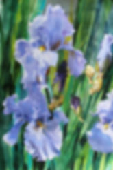 Pale Iris-Bivenne-Watercolor-15x22.JPG