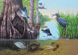 Pond Creek NWR Floodplains Ecology