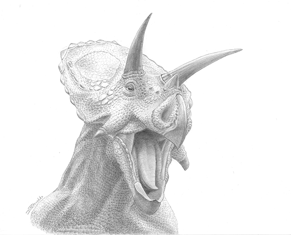 Torosaurus4x6.jpg