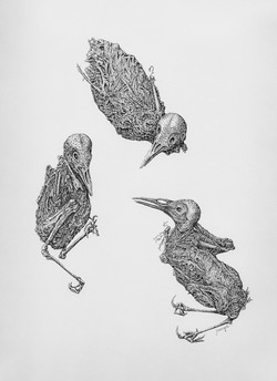 Desiccated-Pen & Ink by Jeanette Compton