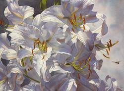 Linda Thomas-Casablanca Lilies