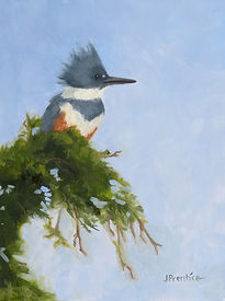Belted Kingfisher in Oil by J. Prentice