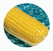 Corn_02112020 (1).jpg