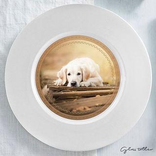 plato perro decorado