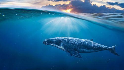 whale-light.jpg