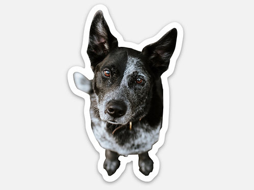 Gauley Wiggle Bear Sticker