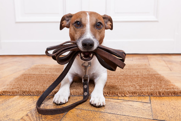 Healthy Lessons from Our Pets
