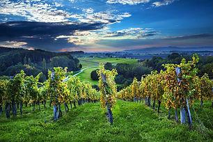 dolenjska vinogradi.jpg