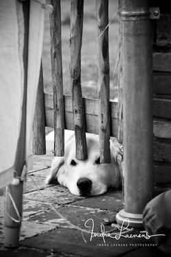 Opmaak huwelijk- stilleven hond