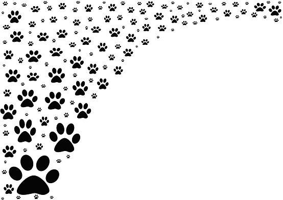 Background-Animal footprints on white ba