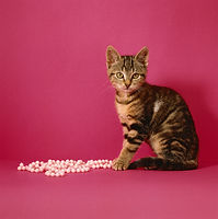 Canva - Cat sitting by bead necklace.jpg