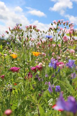 Blumenwiese und Zentrum für Wildbienen