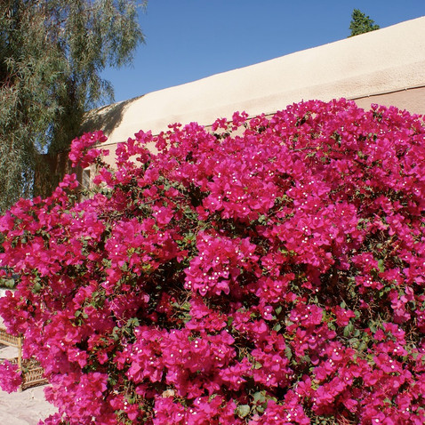 Farafra - Dakhla oasis Egypt - 6.jpeg