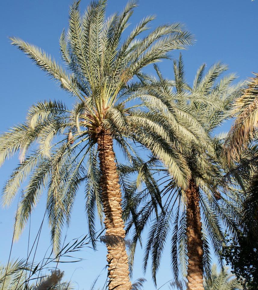 Farafra - Dakhla oasis Egypt - 32.jpeg