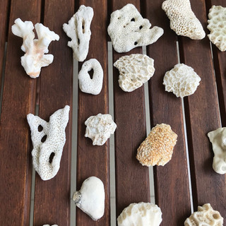 Available Corals from Bali