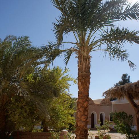 Farafra - Dakhla oasis Egypt - 10.jpeg