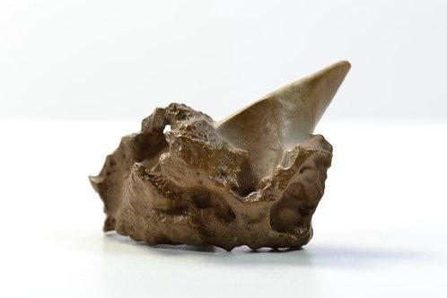 DESERT STONE from Egypt - White Desert Farafra - amazing stone - 22 g