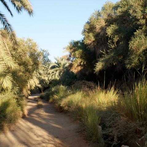 Farafra - Dakhla oasis Egypt - 37.jpeg