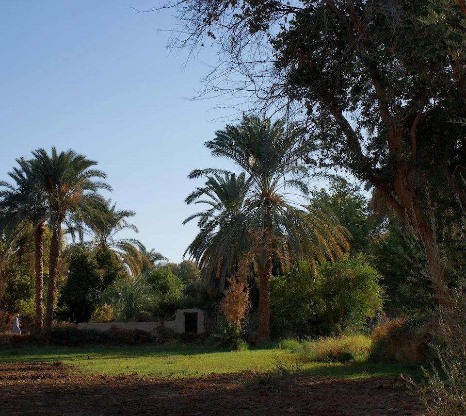 Farafra - Dakhla oasis Egypt - 28.jpeg