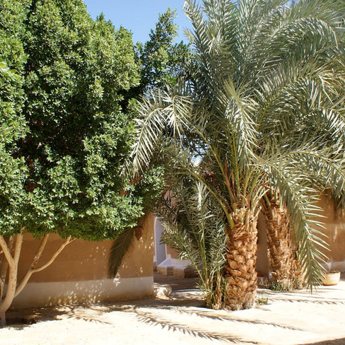 Farafra - Dakhla oasis Egypt - 7.jpeg