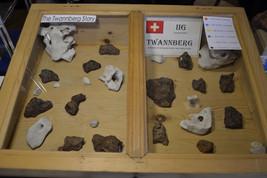 Twannberg Meteorites
