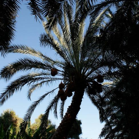 Farafra - Dakhla oasis Egypt - 34.jpeg