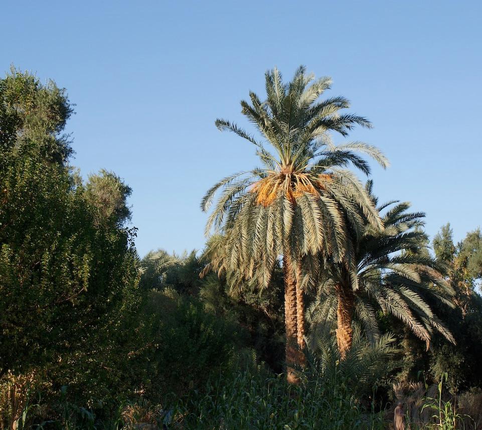 Farafra - Dakhla oasis Egypt - 31.jpeg