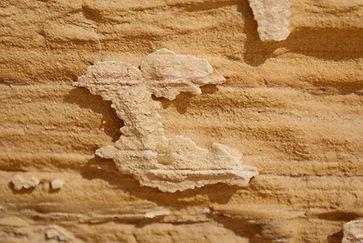 desert macro pictures