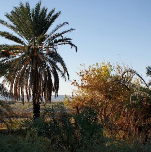 Farafra - Dakhla oasis Egypt - 35.jpeg