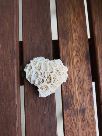 Corals Bali