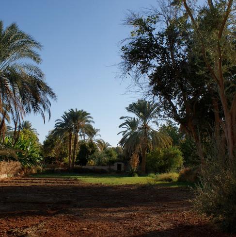 Farafra - Dakhla oasis Egypt - 27.jpeg