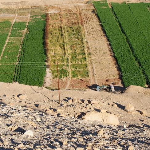 Farafra - Dakhla oasis Egypt - 42.jpeg
