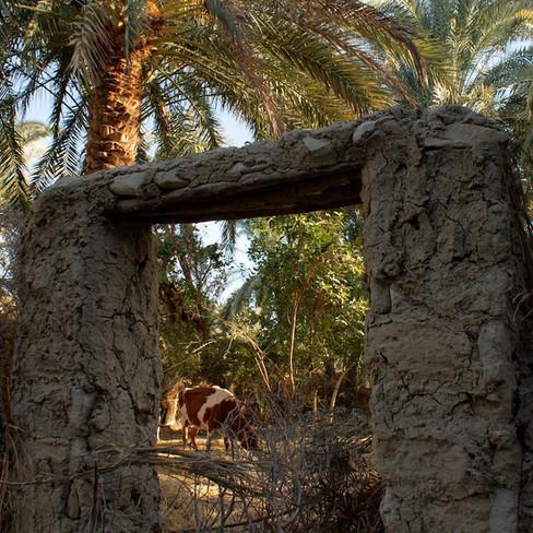 Farafra - Dakhla oasis Egypt - 33.jpeg