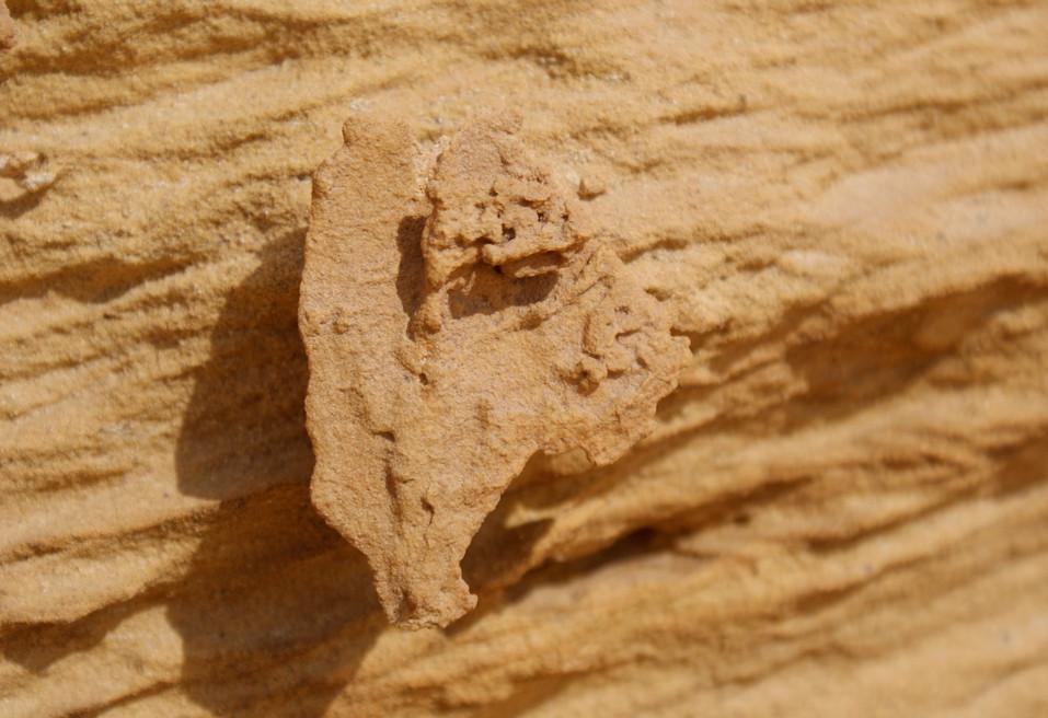 Desert Macro picture