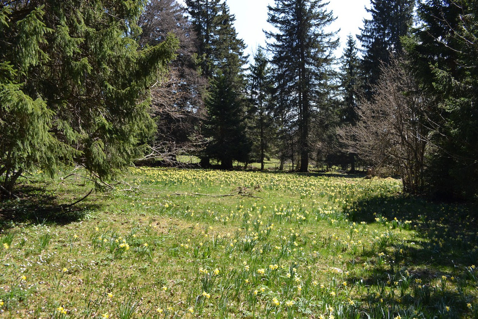 Spring on Mont Sujet