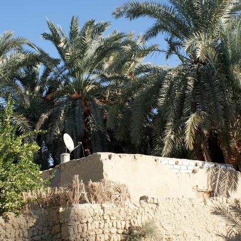 Farafra - Dakhla oasis Egypt - 26.jpeg