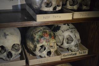 Natural History Museum Vienna