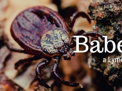 Lyme Coinfection Series-Babesia