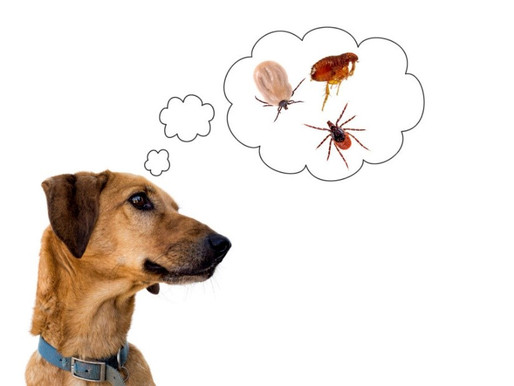 Tick & Lyme Prevention for Your Pets