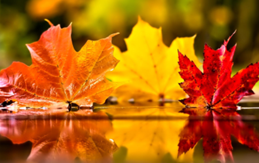 Fall into Wellness with IM of CNY's Limited Time Wellness Packages